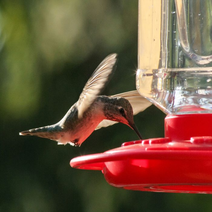 Hummingbird Feeder Gettyimages 1220703394