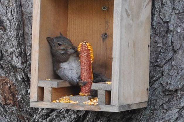 2Squirrel_BetsyChamberlain