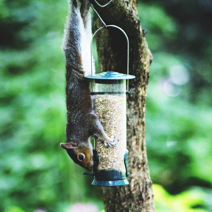 Close-Up Of Squirrel On Bird Feeder Against Tree Trunk