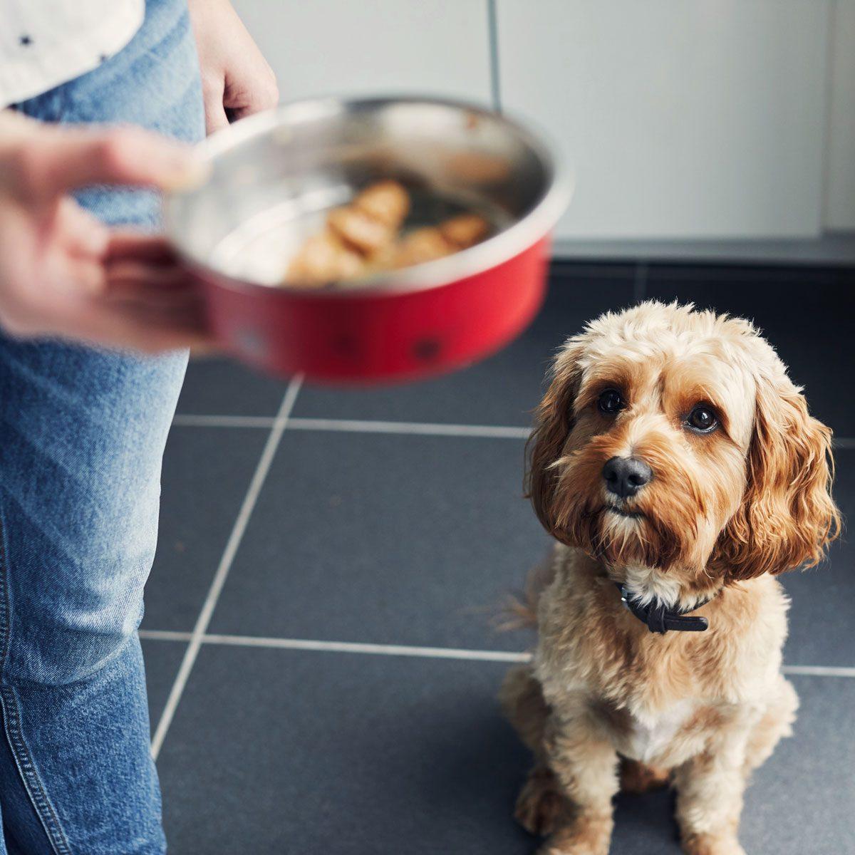 Woman feeding her pet dog