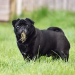 Is Grass Safe for Dogs to Eat?