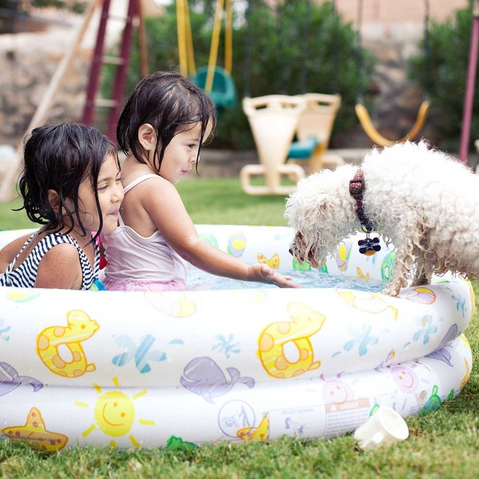 Kids in a kiddie pool with a dog