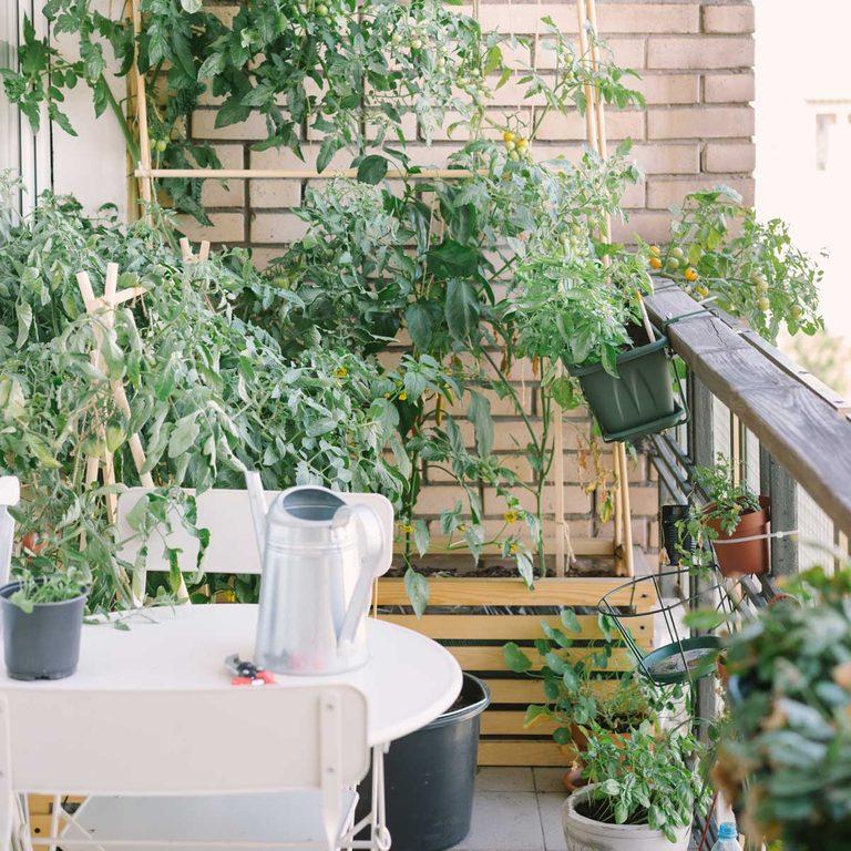 Urban garden on a balcony