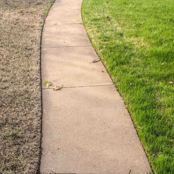Sidewalk with healthy grass on one side