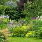7 Gardening Mistakes You Might Be Making with Your Perennial Plants