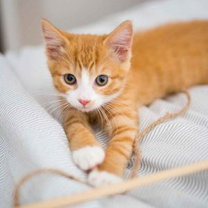 How to Make DIY Cat Toys