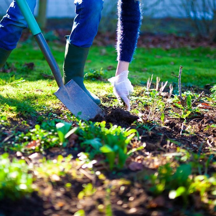 Woman digging a hole in the garden with a spade fall gardening