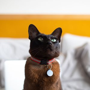 Should You Get a Collar for Your Cat?