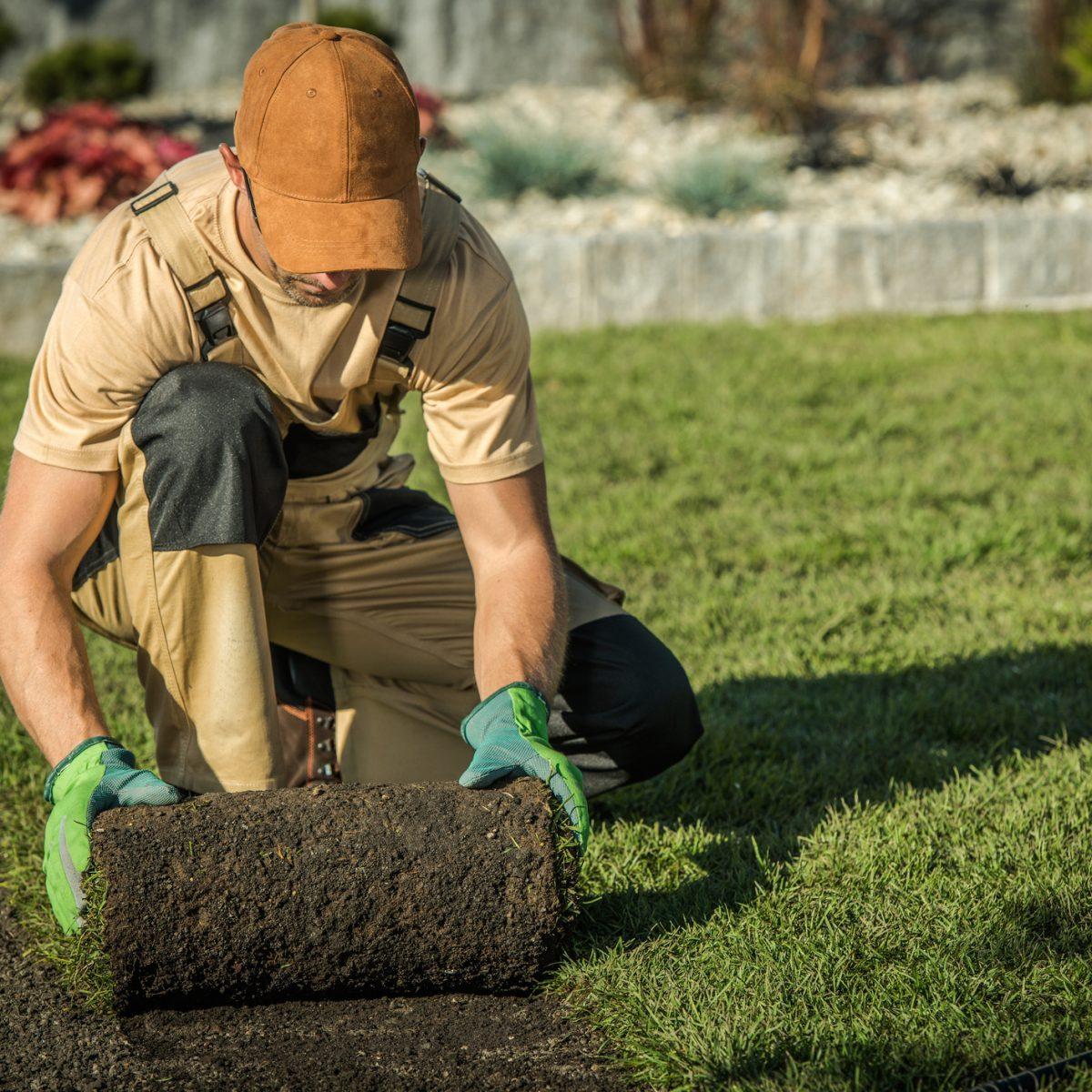 Garden Lawn Technician Worker Installing New Natural Grass From Roll.