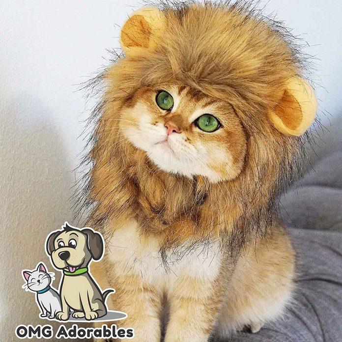 Lion cat costume