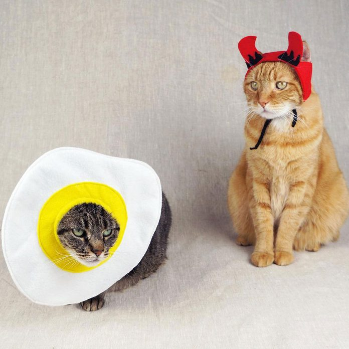 Deviled Egg cat costume
