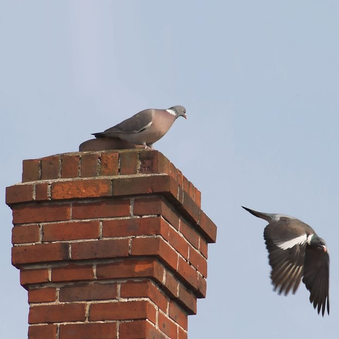 Birds flying out of a chimney