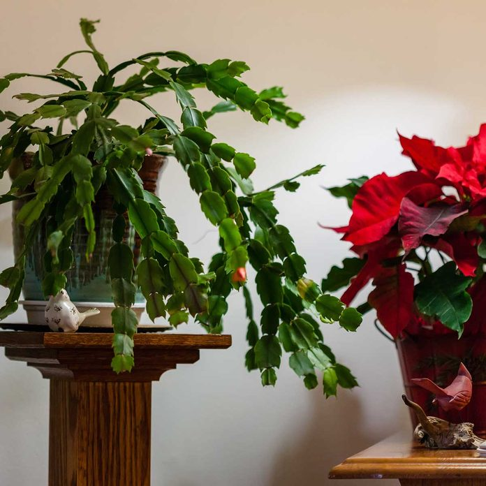 Holiday plants on stands