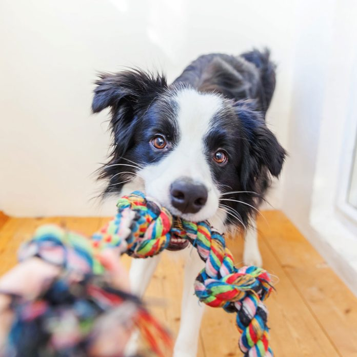 Dog with a rope