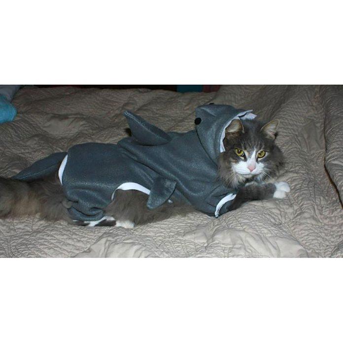 Shark cat costume