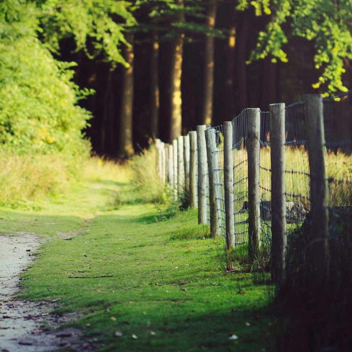 Wire fence with wood posts