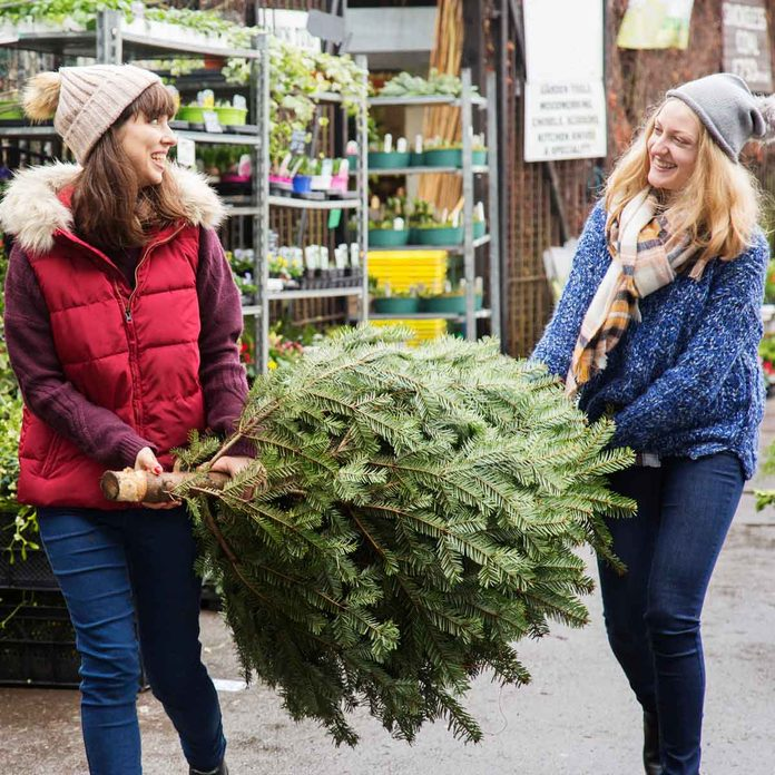 Buying a Christmas tree at a garden store