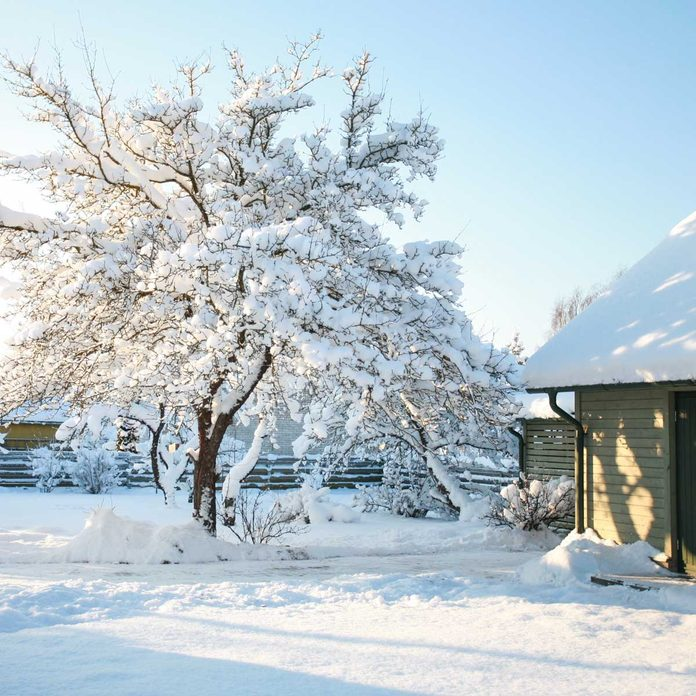 Snow-covered tree touching a house