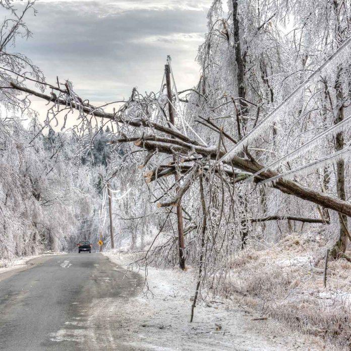 Fallen tree on power lines near a winter road