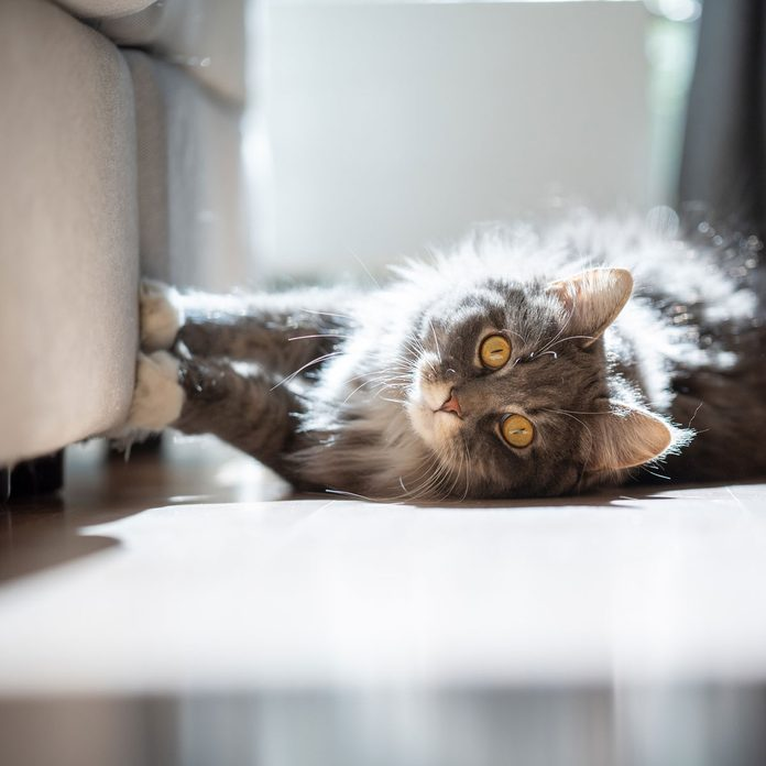 Cat Scratching Couch Gettyimages 1215210355