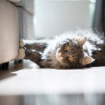 Best Ways to Protect Your Furniture From Your Cat or Dog