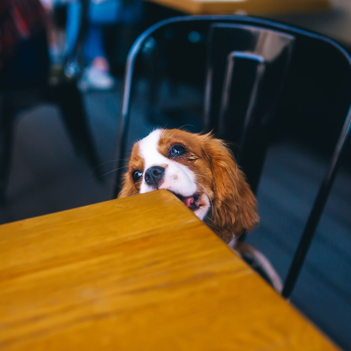 Dog Chewing A Table Gettyimages 1257391994