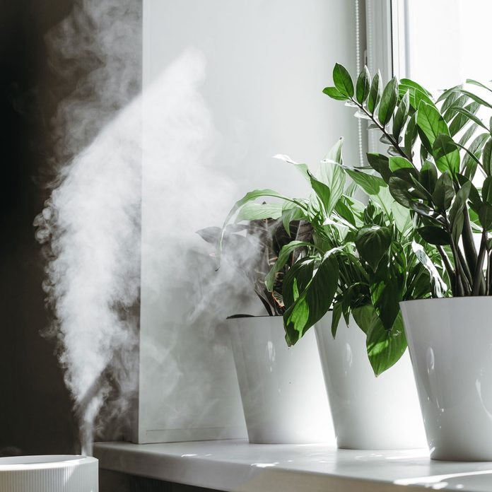 Plant Humidifier Gettyimages 1231181425