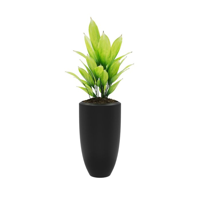 Cast Iron Plant Gettyimages 1144381285