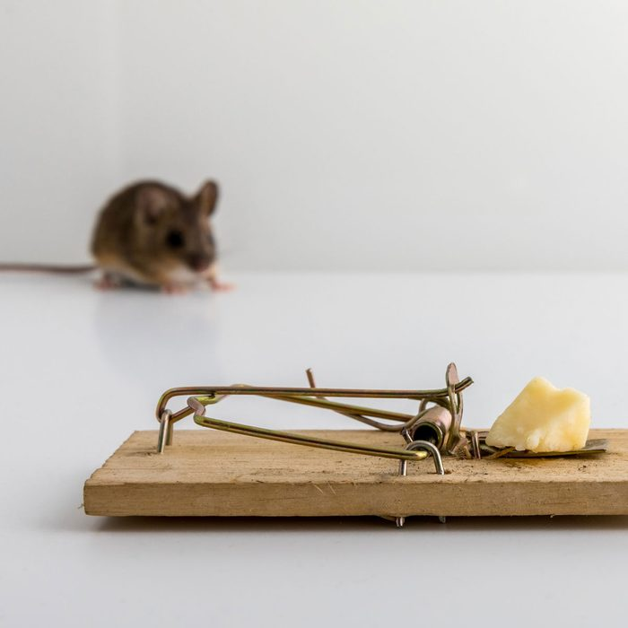 Mouse Trap With Cheese Gettyimages 1030568128
