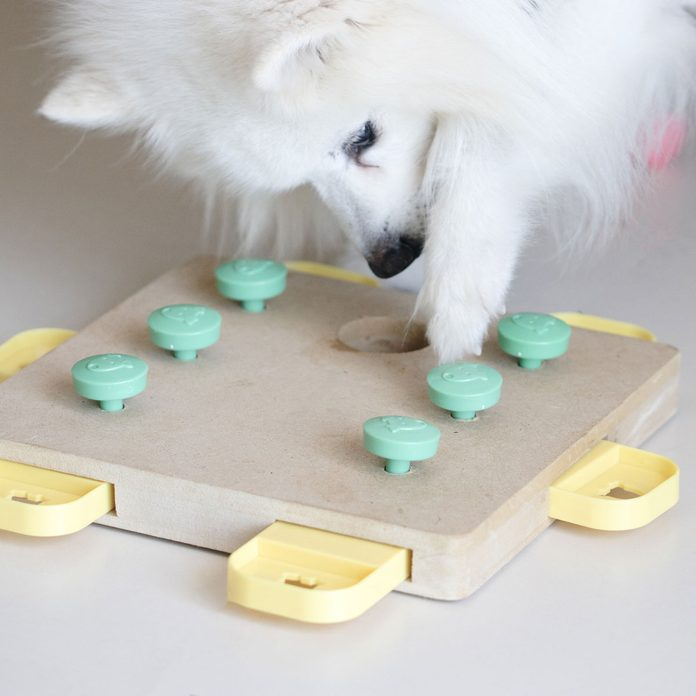 Puzzle Dog Feeder Gettyimages 1217573262