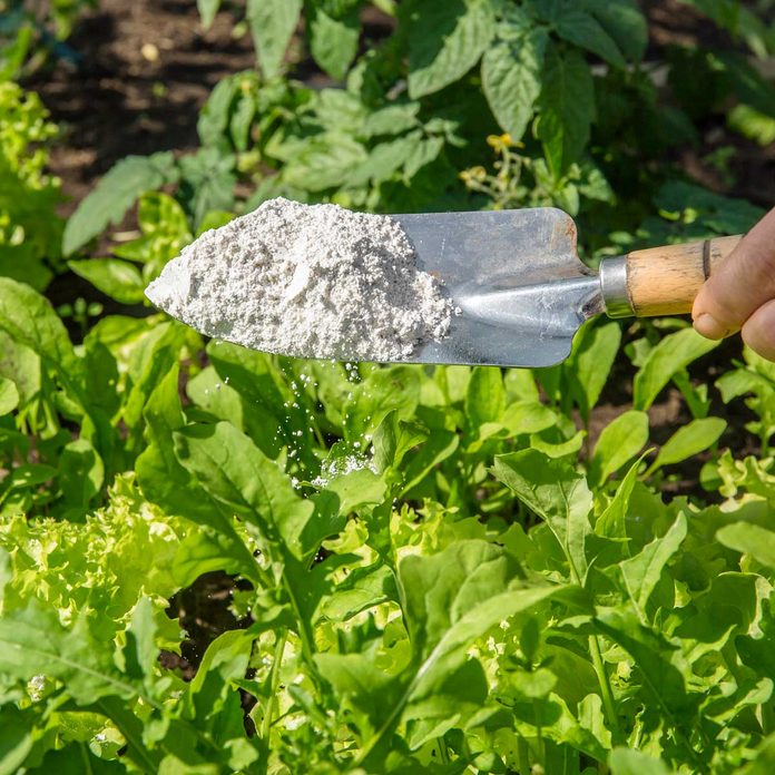 Diatomaceous Earth Gettyimages 1251355283