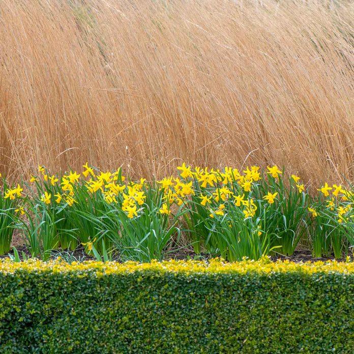 layered flower border