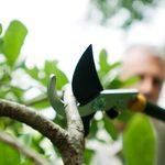 5 Best Tree Trimming Tools