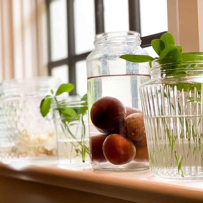 Plants growing in window sill