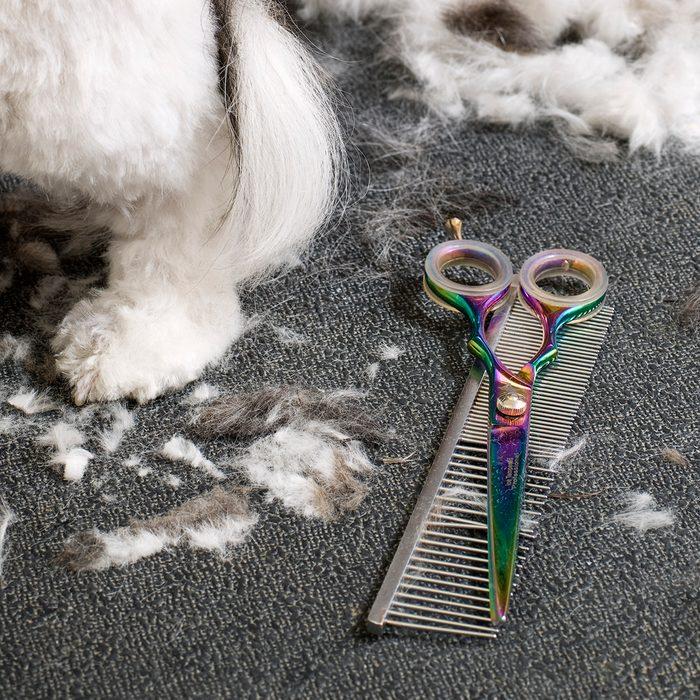 Detail Of Dog Grooming