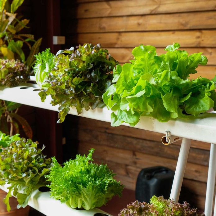 Hydroponic Garden Gettyimages 855485096
