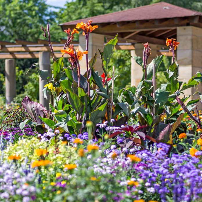 Landscaping With Cannas