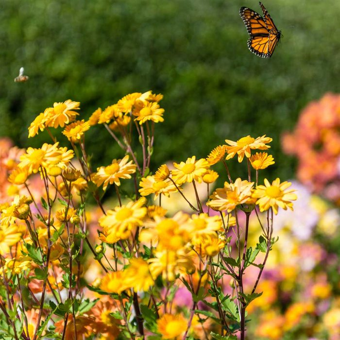Butterfly and bee in a sustainable Pollinator Garden