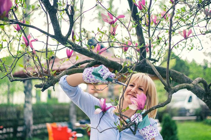 Pruning A Magnolia Tree