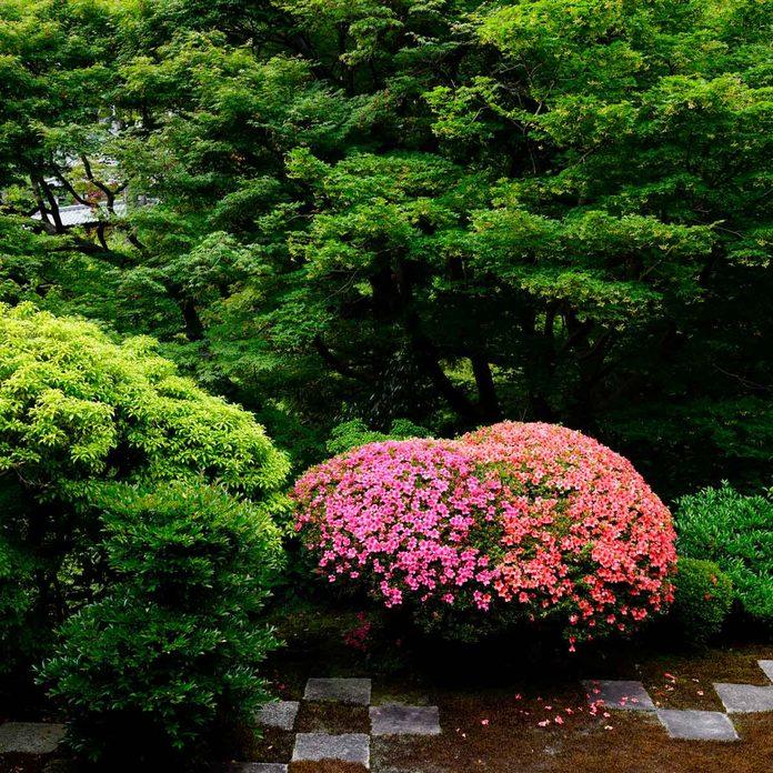 Azalea Companion Plants