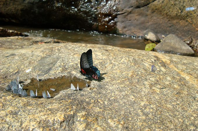 Butterfly Drinking Water