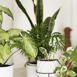 These 8 Houseplants Are Worth a Lot of Money!