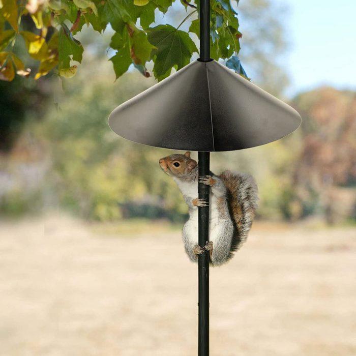 Bird Feeder Pole Squirrel Baffle