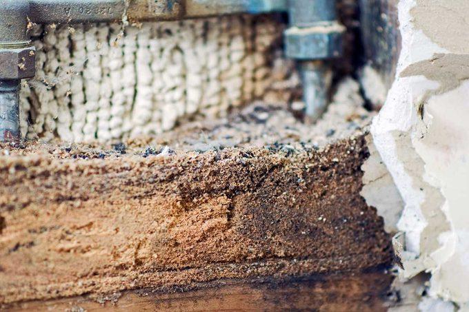 Carpenter Ant Sawdust
