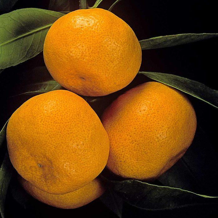 Mandarin Tree Gettyimages 522182718