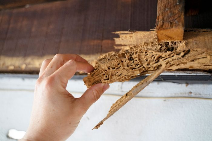 Termite Damage Gettyimages 1300681997