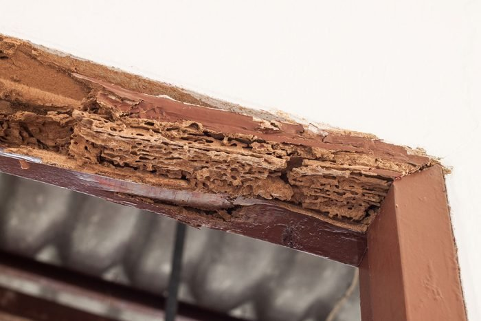 Termite Damage Gettyimages 495775800