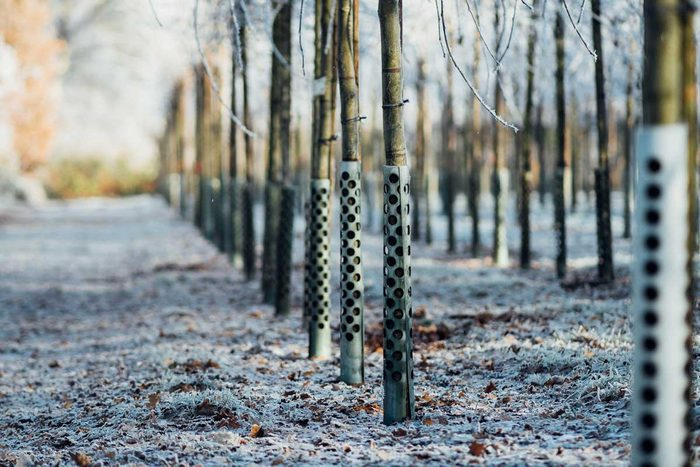 Metal Tree Guards Gettyimages 697622369