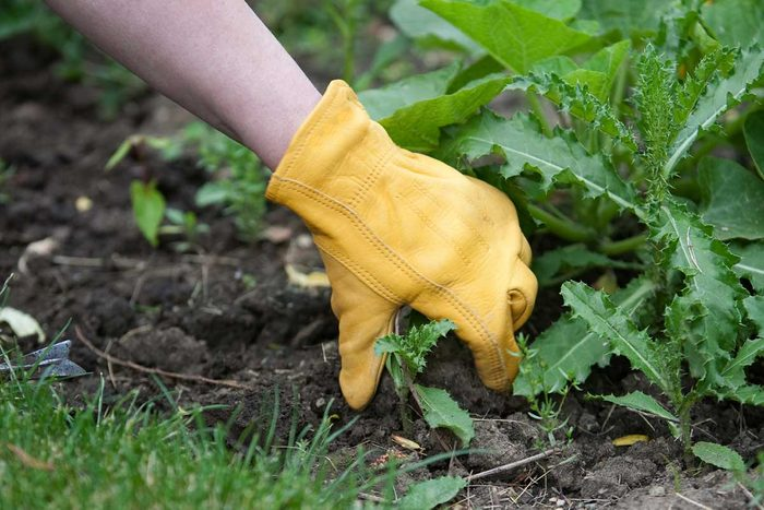Pulling Weeds Gettyimages 173924136
