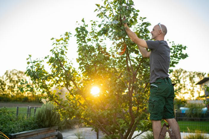 man on ladder in garden caring for his tree